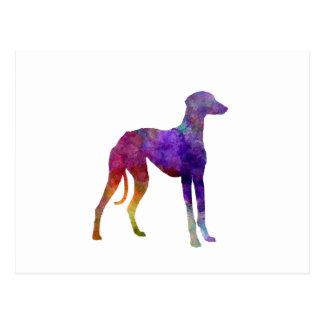 Arabian Greyhound in watercolor Postcard