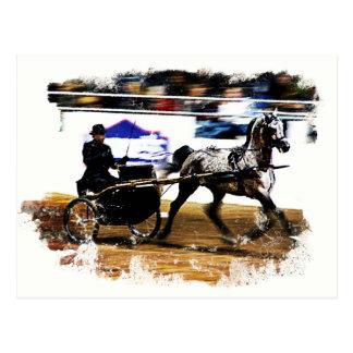 Arabian Harness Horse Postcard