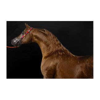 Arabian horse acrylic wall art