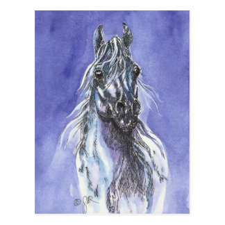 Arabian Horse Art Postcard