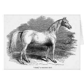 Arabian Horse, Card