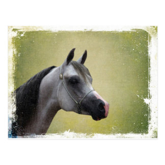 Arabian Horse Grunge Postcard