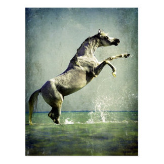Arabian Horse in Water Postcard