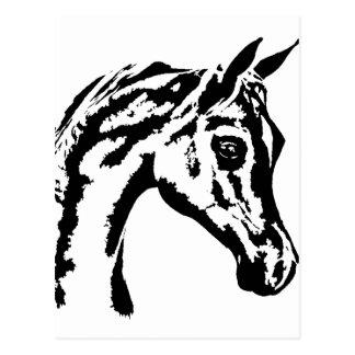 arabian horse postcard