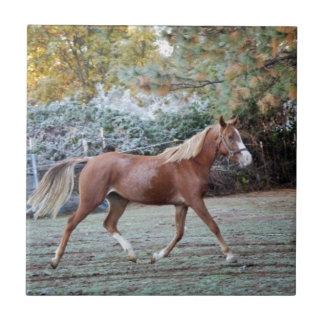 Arabian Horse running free on the pasture Tile