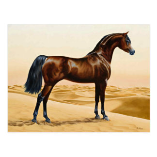 Arabian Horse - William Barraud Postcard