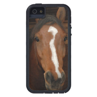 Arabian Horses iPhone 5 Covers