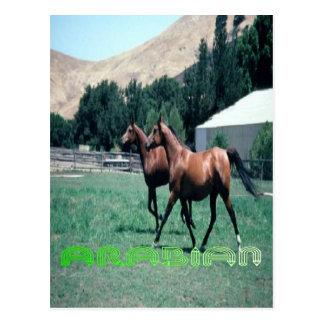 Arabian horse's post card