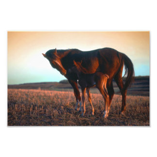 Arabian mare and colt photo print