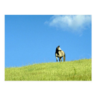 Arabian mare, Victoria, Australia Postcard