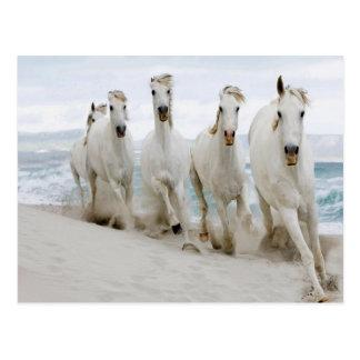 Arabian thoroughbred Ocean view Postcard