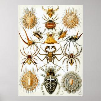 Arachnides par Ernst Haeckel, araignées vintages Poster