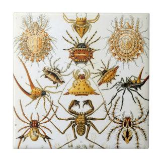Arachnids by Ernst Haeckel, Vintage Spiders Ceramic Tiles