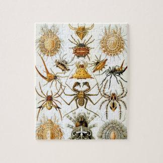 Arachnids by Ernst Haeckel, Vintage Spiders Puzzle