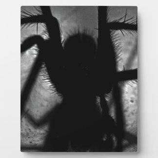 Arachnophobia... Plaque