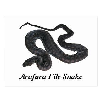 Arafura File Snake Postcard