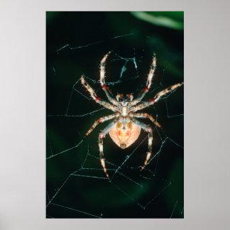 Araignée à pieds rouges de Globe-Web Poster