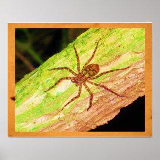 Araignée Affiche