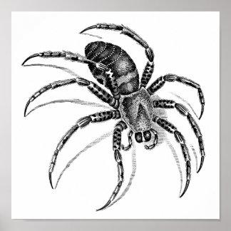 Araignée Affiches