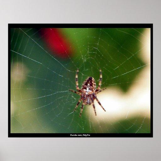 Araignée Posters