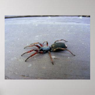 Araignée coupée la queue par blanc posters