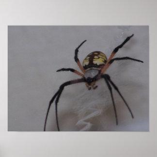 Araignée croisée de Saint Andrews Affiches