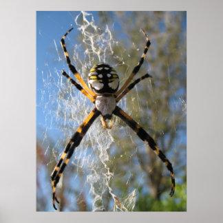 Araignée d'Argiope Poster