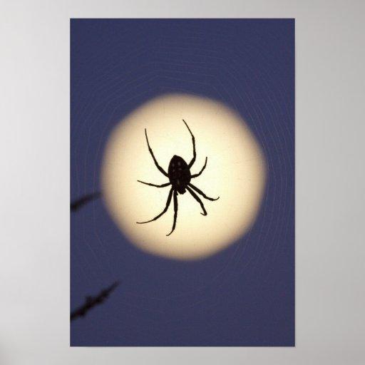 Araignée de globe sur le Web avec la pleine lune,  Affiche