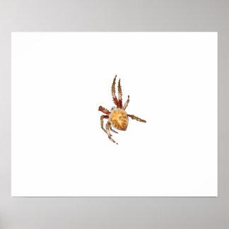 Araignée de tisserand de globe de jardin posters