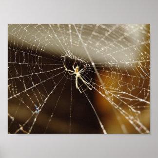 Araignée en Web Poster