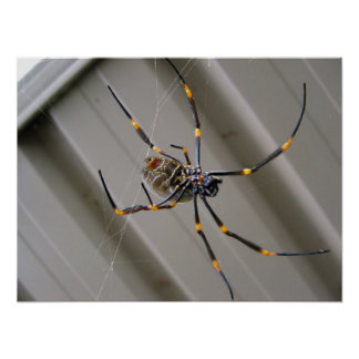 Araignée géante posters