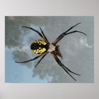 Araignée, jardin commun