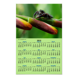 Araignée sautante posters