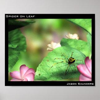 Araignée sur la feuille poster