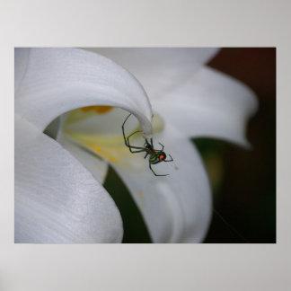 Araignée sur la fleur posters