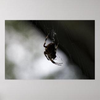 Araignée sur le Web - obscurité Poster
