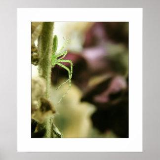 araignée verte de lynx posters