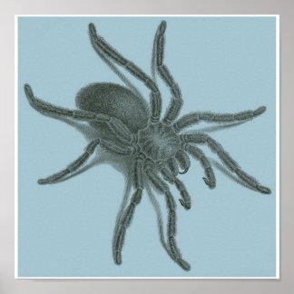 Aranea Avicularia, araignée cubaine noire Posters