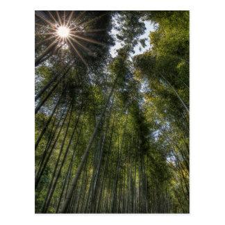 Arashiyama Bamboo Grove - Kyoto, Japan Postcard