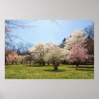 Arboretum: Mix of Flowering Trees Poster