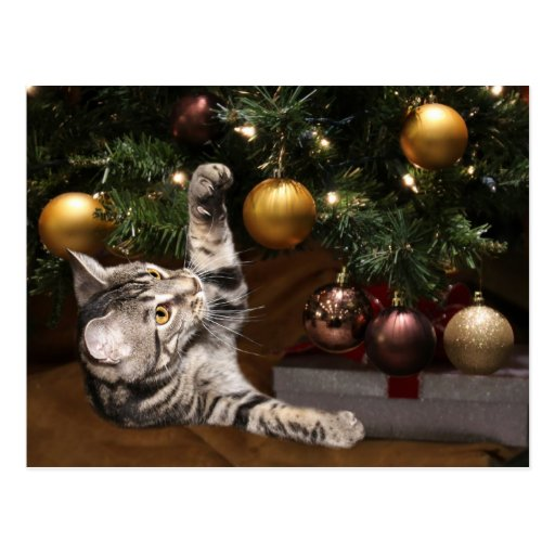 Arbre de chat tigré et de Noël Cartes Postales
