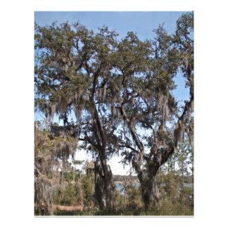 Arbre de chêne vivant aux berges contre le ciel bl prospectus 21,6 cm x 24,94 cm