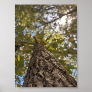 arbre de recourbement posters
