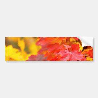 Arbres avec le feuille orange et jaune en automne autocollant de voiture