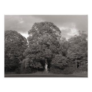 Arbres d'automne, parc de Bute, Cardiff Tirages Photo