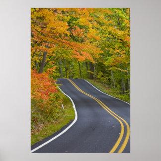 Arbres d'érable colorés dans la ligne d'automne pi posters