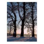 Arbres d'hiver sur l'arrière - plan de ciel bleu cartes postales
