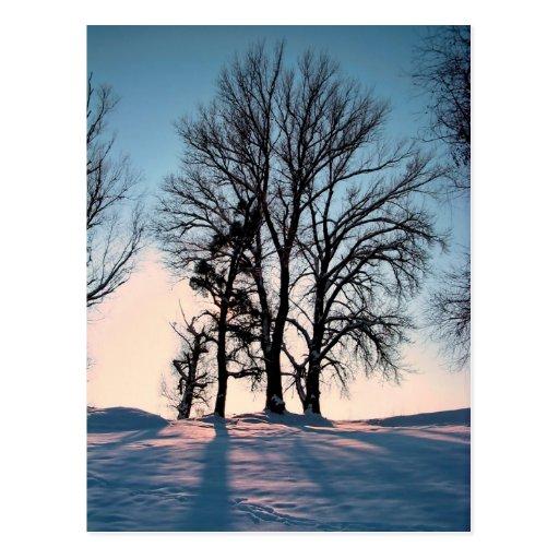 Arbres d'hiver sur l'arrière - plan de ciel bleu carte postale