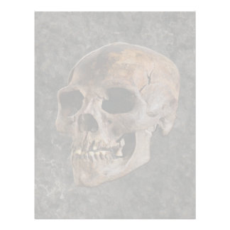 Archaeology II - Skull on Stone-effect Background Letterhead