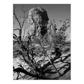 Arches National Park Black and White Photography Postcard